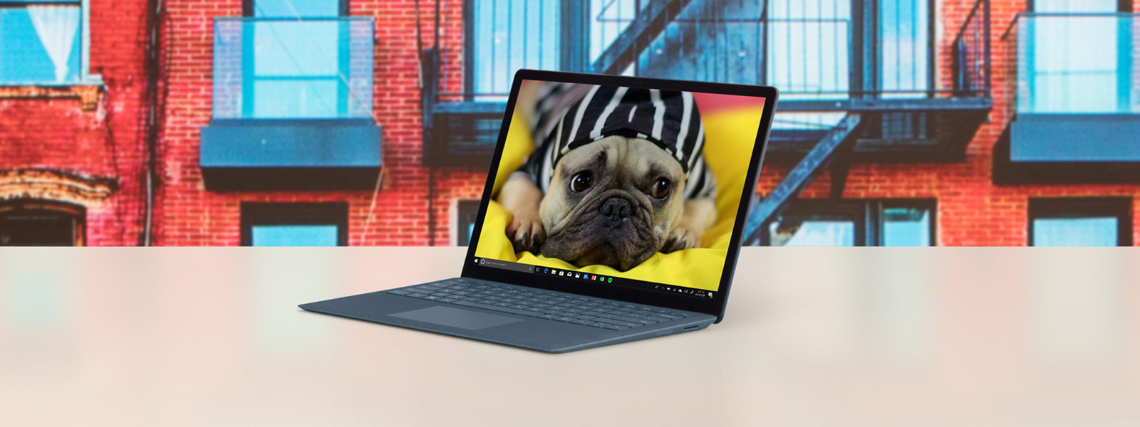 Cobalt Blue Surface Laptop showing a dog on the screen and colorful buildings in the background.