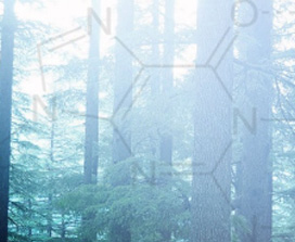 A picture of a forest overlayed by chemistry symbols
