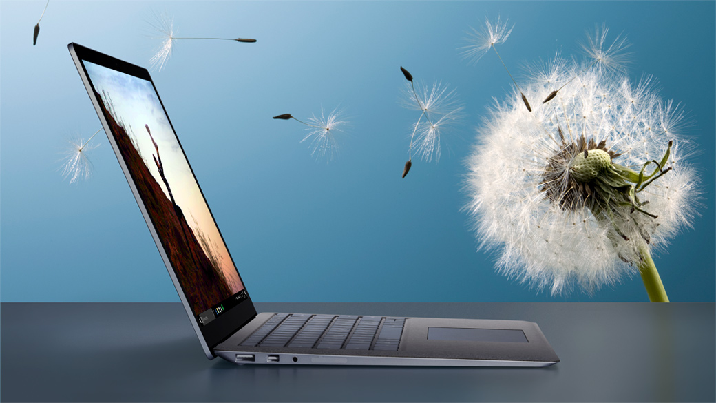 Surface Laptop against a dandelion backdrop.