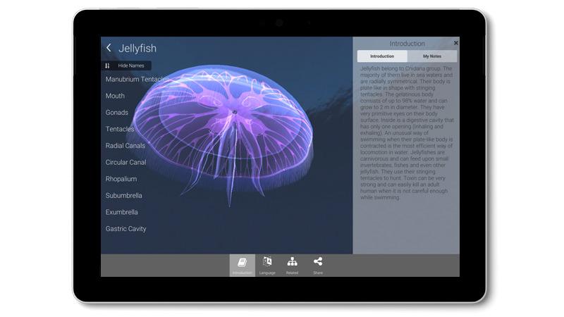Surface Go -laitteessa näkyvä Lifeliqe-sovellus, jossa on tietoja ja kolmiulotteinen kuva meduusasta