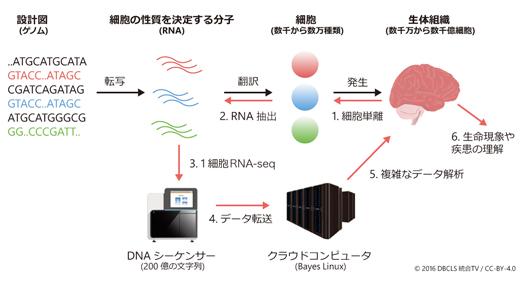 図 1. 1細胞RNAシーケンスとデータ解析技術を用いて、生命現象や疾患を理解する。